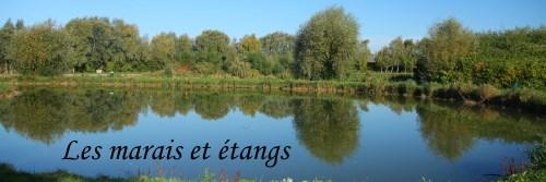 Les Etangs
