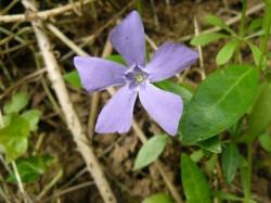Une autre fleur.