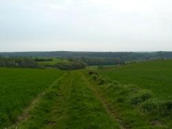 Chemin herbeux.