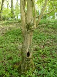 Et arbre creux nous hellant au respect.