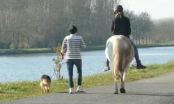 Marche ou cheval.