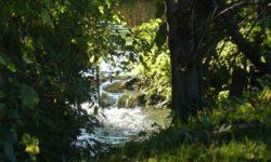 Le ruisseau de Caucourt.
